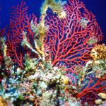 coralli subacquea Pantelleria
