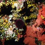 I fondali di pantelleria